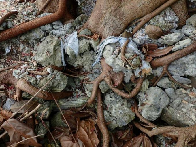 Du corail mort saisi au centre de méditation 'Muktawan 1'