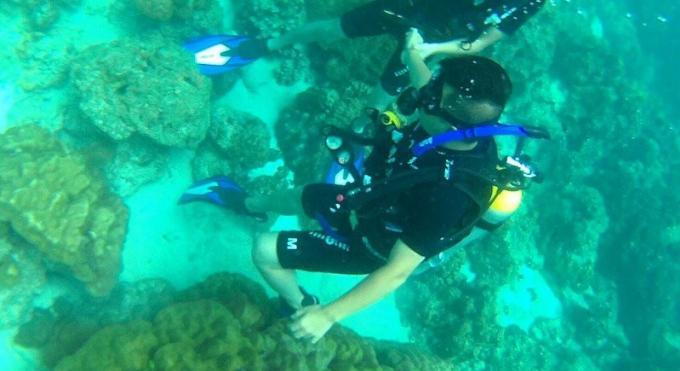 'Try Dive' épinglé pour destruction de corail
