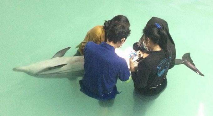 Les officiels ne sont pas parvenus à sauver le dauphin secouru au large de Phuket