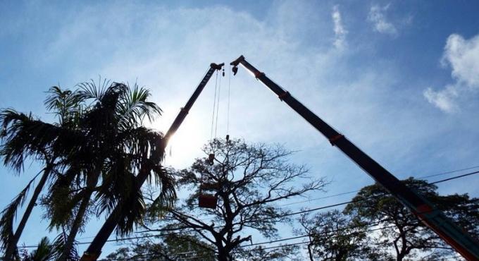 Taille des arbres, des retards à prévoir à Phuket Town aujourd'hui