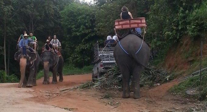 L'éléphant n'aimait pas les piqures