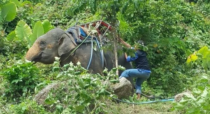 Deux officiels blessés par un éléphant