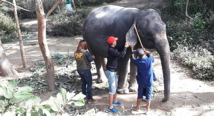 219 éléphants de Phuket ont été contrôlés, ils sont tous légalement répertoriés
