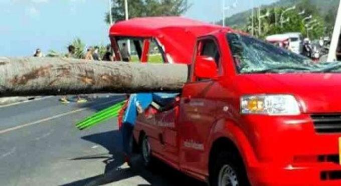 Un tuk-tuk écrasé par un palmier