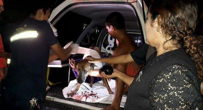 Des habitants inquiets après avoir retrouvé un chien poignardé