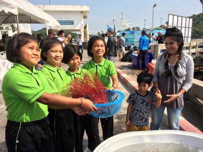 Les gorgones de mer braconnées par les contrebandiers sont replantées au large de Phuket