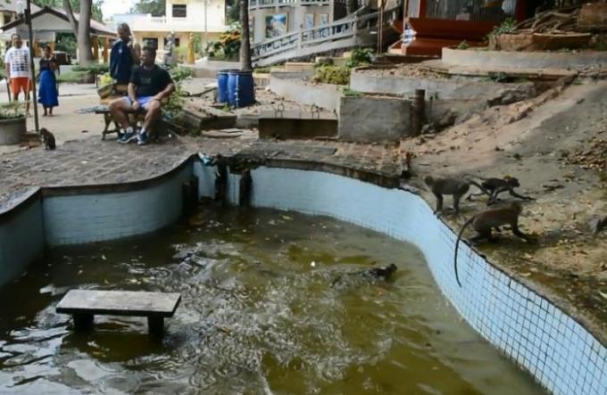 Petite baignade pour les singes pendant la vague de chaleur