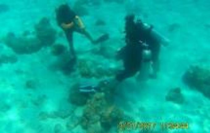 Des touristes coréens et leur instructeur de plongée recherché après avoir endommagé des coraux