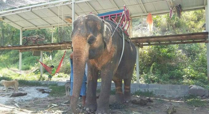 Hey, c'est mon éléphant qui est à Phuket