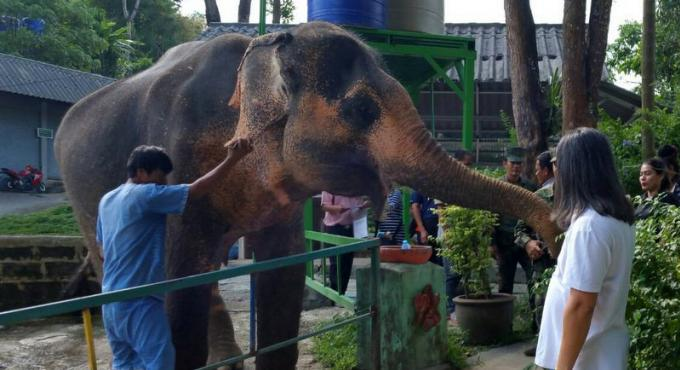 Une bataille de 'paperasse' pour la propriété de l'éléphant