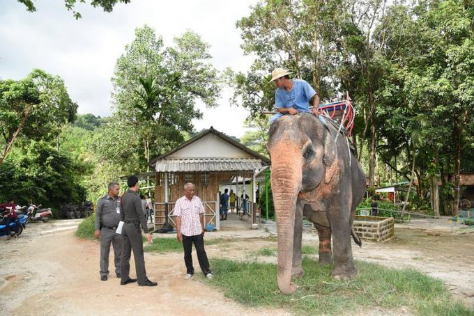 Nouveau rebondissement dans la bataille pour la propriété de l'éléphant