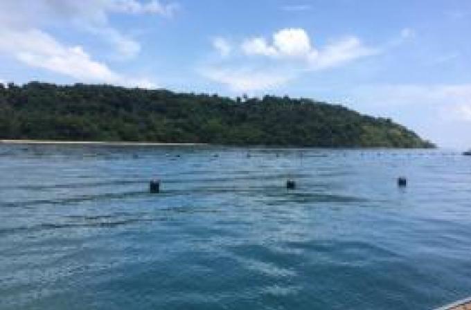 Des cocotiers plantés illégalement sur un terrain contesté de Naka Noi