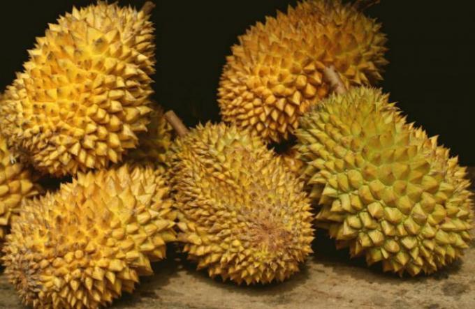 Le durian de Phuket en voie d'être labélisé AOC