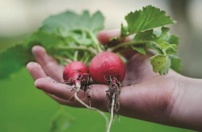 Faire manger plus de légumes à vos enfants