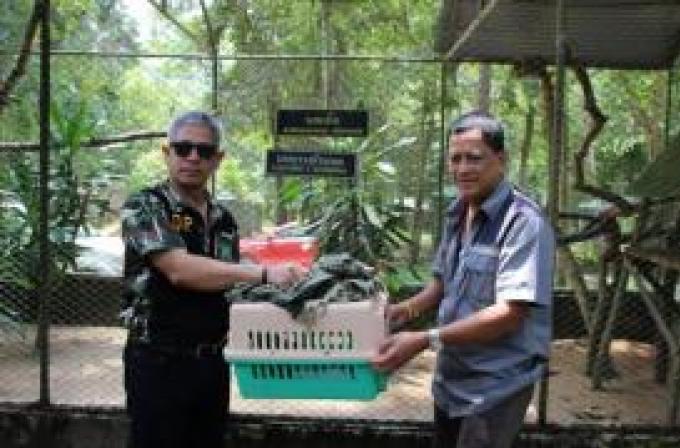 Les officiels des parcs nationaux demandent l'arrêt du commerce de calao