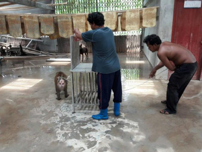 Un villageois capture un singe en fuite