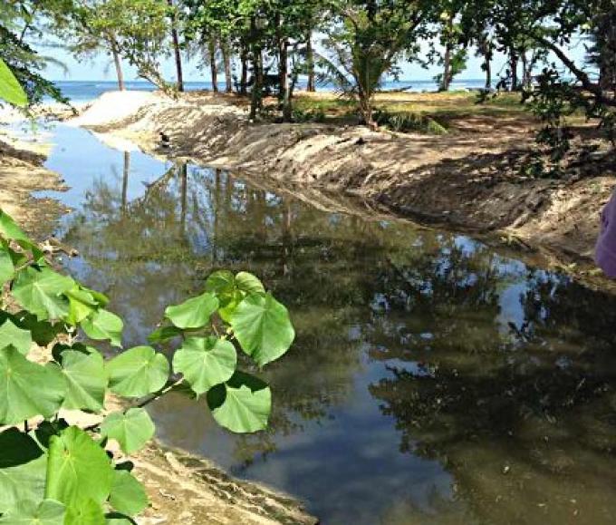 L'eau noire sur la plage de Phuket n'est pas la pollution