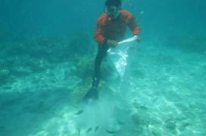 Les officiels remettent le corail confisqué à l'océan