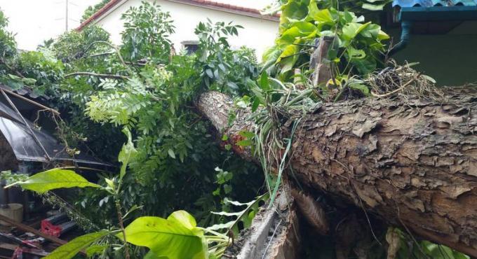 Un arbre déraciné par le vent endommage deux bâtiments