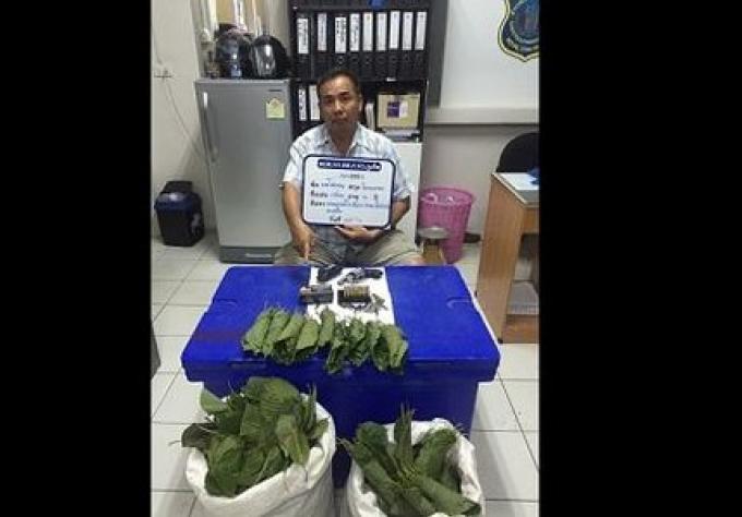 La police de Phuket a arreté un homme en possession de kratom, d'une arme et des munitions