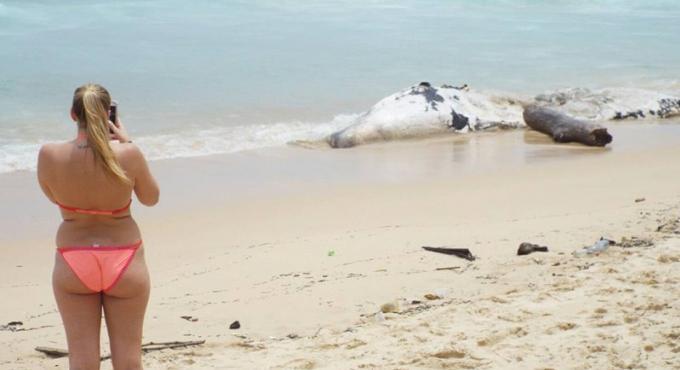 La carcasse d'un cachalot retrouvée flottante au large de Phuket