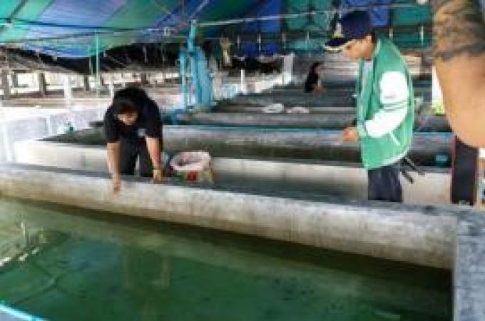 Un chauffeur de car arrêté avec près d'un millier d'animaux marins protégés