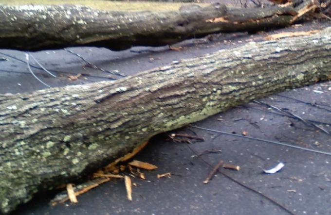 Des arbres coupés le long de la bypass road pour faciliter le trafic