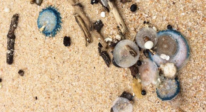 Les sauveteurs mettent en garde contre les méduses, cette fois sur Patong Beach