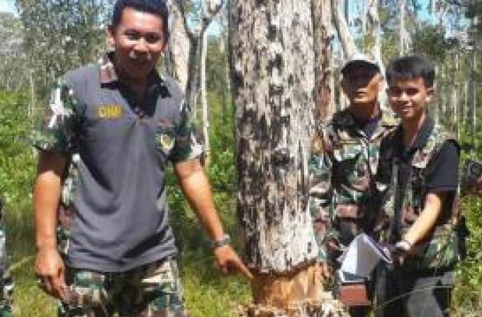 Les officiers du département des forêts saisissent plus de 100 rais de terrains à Koh Lanta