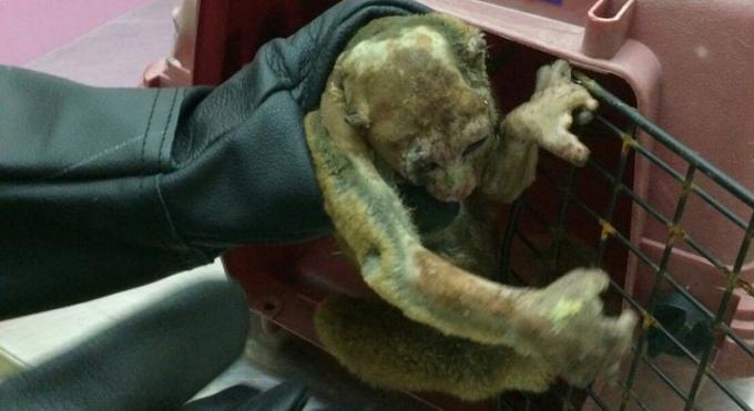 Un lori soigne après s'être électrocuté