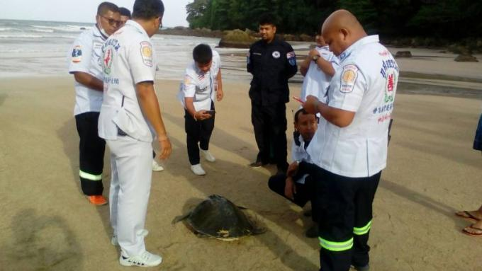 Une tortue blessée secourue a Kamala Beach