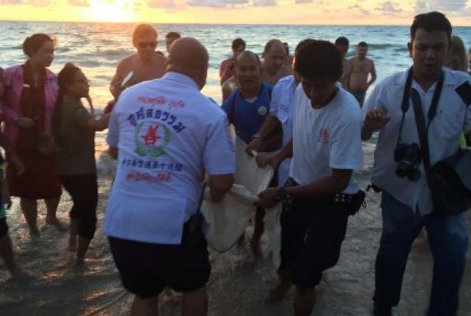 Les efforts de sauvetage ne parviennent pas à sauver le dauphin rayé à Phuket