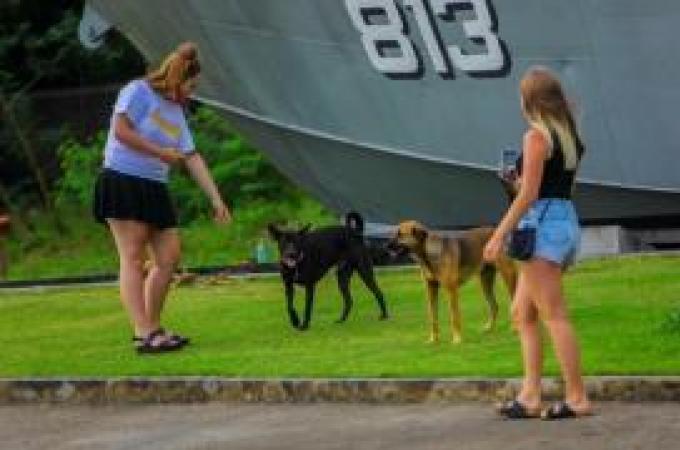 Une touriste australienne attaquée par un chien errant a Khao Lak