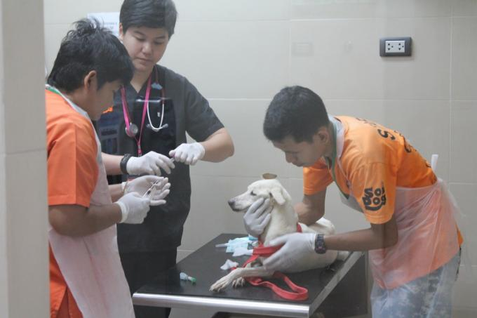 Soi Dog Foundation recoit un soutien royal