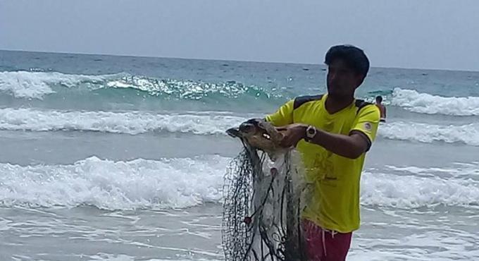 Les tortues prises au piège des filets de pêche donnent du travail supplémentaire aux sauveteurs
