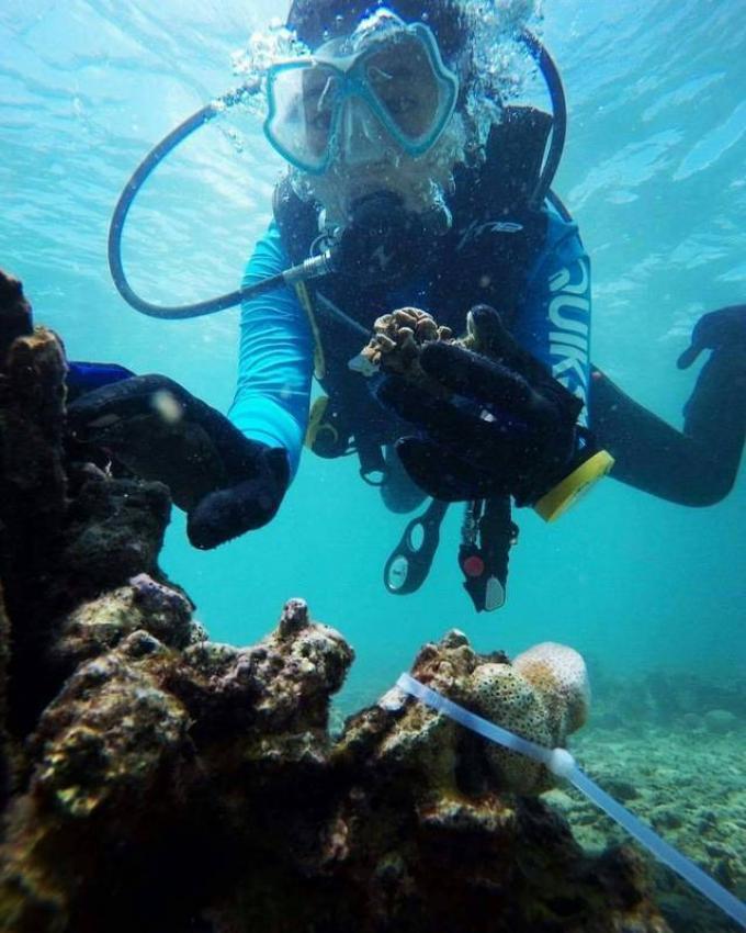 Officiels et plongeurs ensembles pour restaurer le récif de Koh Khai
