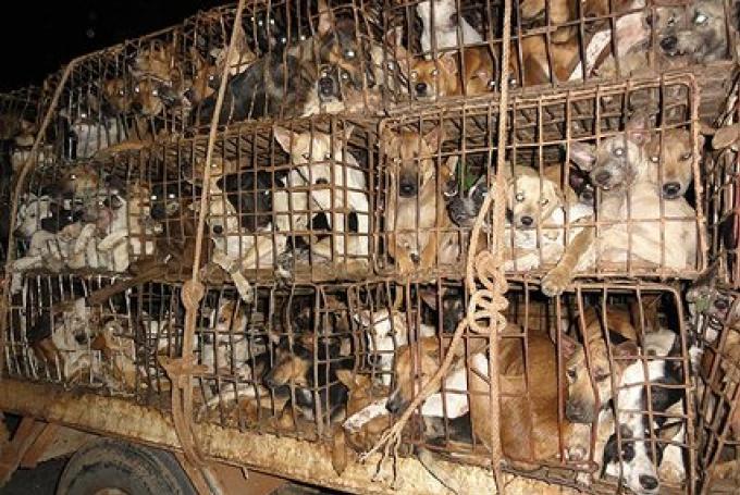 Animaux de compagnie: Soi Dog Foundation cherche de nouveaux adoptants