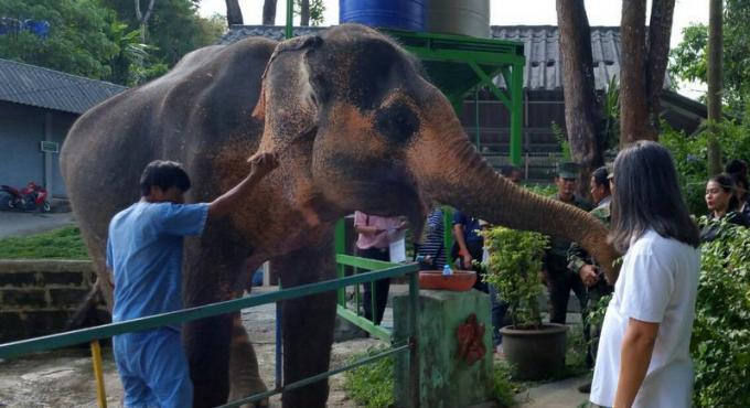 La bataille pour la propriété de l'éléphant se poursuit