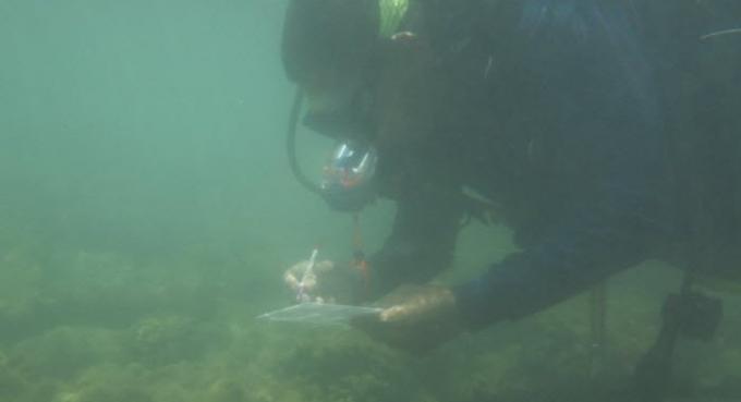 Les experts disent de ne pas s'alarmer de l'apparition de poux de mer a Phuket