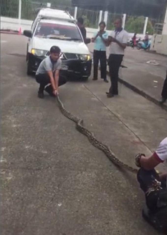 Les serpents sont de sortie