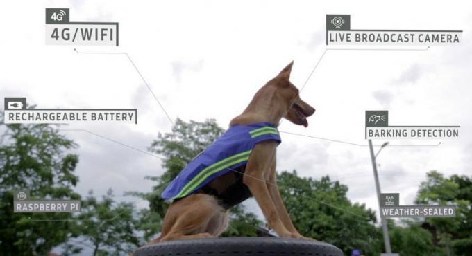Soi Dog transforme les cabots en chiens de garde high-tech