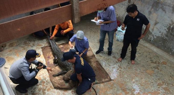 Des tests ADN pour déterminer l'espèce du crocodile