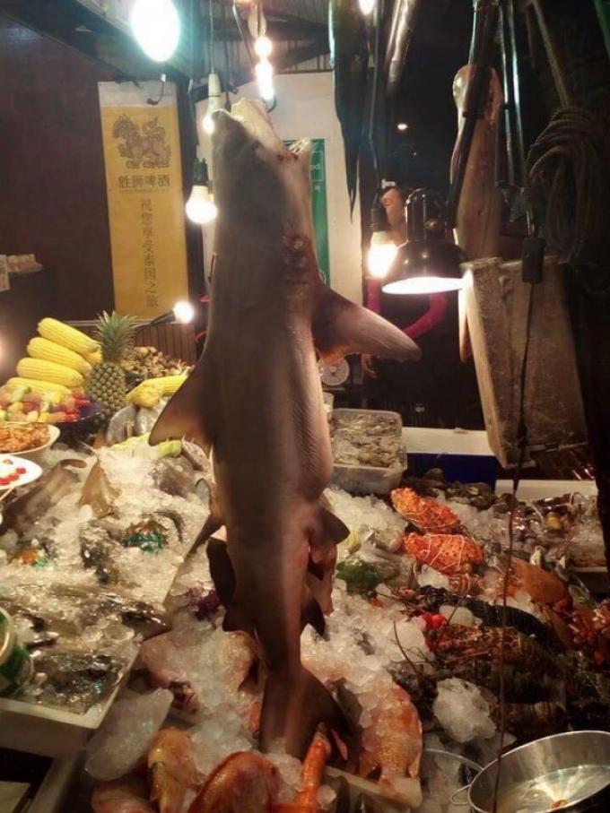 Des requins zèbre et des requins taureau seraient au menu d'un restaurant de Phuket