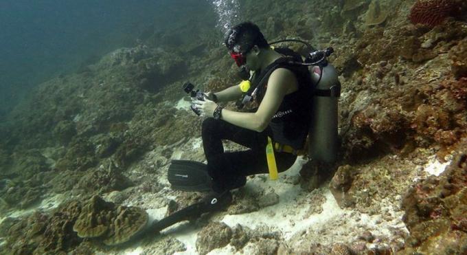 Le DMCR demande de l'aide pour identifier le plongeur qui s'est assis sur le corail