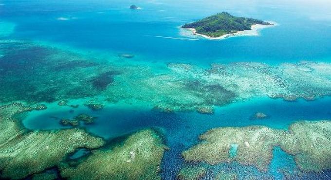 Plonger dans la restauration du corail