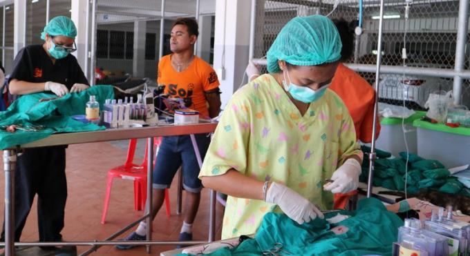Soi Dog participe à la campagne de vaccinations et stérilisations gratuites