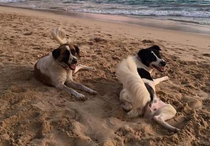 Des règles pour les chiens doivent être appliquées sur la plage populaire de Phuket