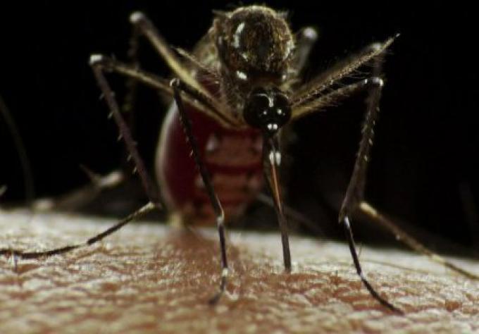 La dengue se propage à Krabi,