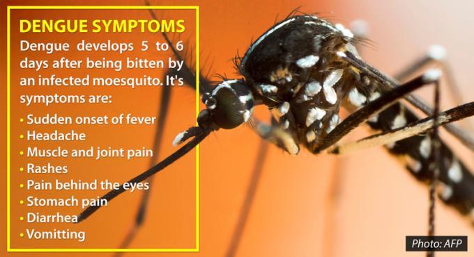 Danger Dengue : Phuket connaît le taux d'infection le plus élevé du pays