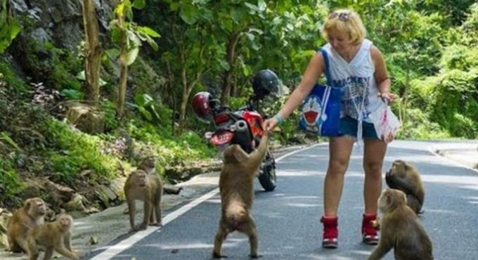 La population décidera du sort des singes